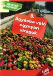 - Ágyásba való egynyári virágok
