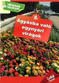 Ágyásba való egynyári virágok