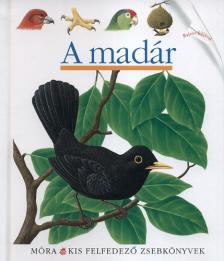 - A madár - Kis felfedező zsebkönyvek
