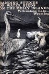 - Banding Studies of Water Birds on the Molly Islands (Molly-szigetek vízimadár állomány-megjelölésük tapasztalatai) [antikvár]