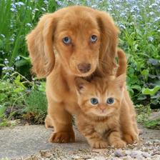 MCG26 - Kutya és macska 3D hűtőmágnes 75 x 75 mm M