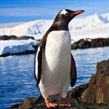 MCG54 - Pingvin 3D hűtőmágnes 75 x 75 mm M